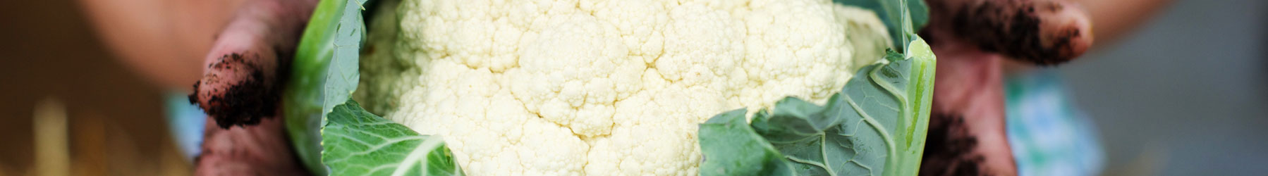 cauliflowers sold at denstone hall farm shop