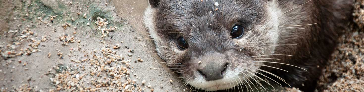 otters-denstone-hall