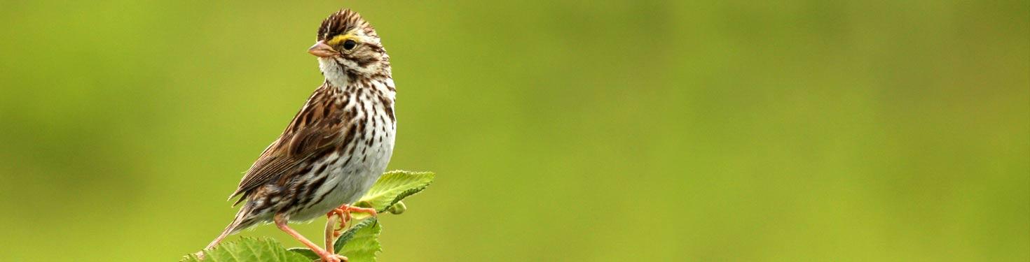 sparrow-denstone-hall